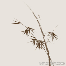 Stock photo collection: Sumi-e Oriental Zen Paintings, Illustrations and designs