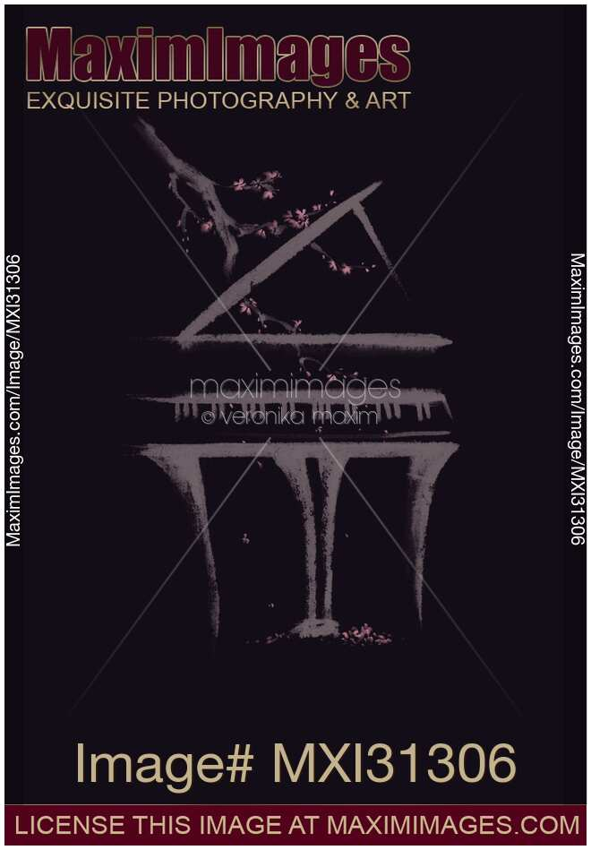 Elegant illustration of a Grand piano with a branch of sakura blossoms on black