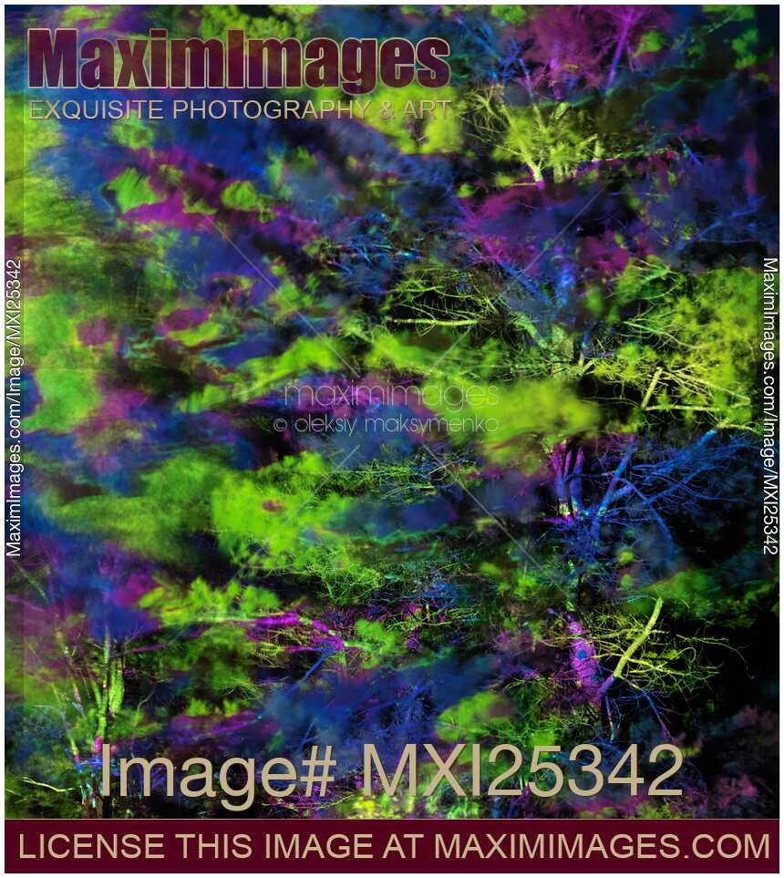 stock photo tree branches lit with abstract colorful