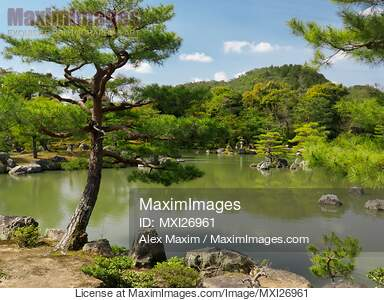 Photo Of Pine Trees At Japanese Garden With Pond In Kyoto Stock