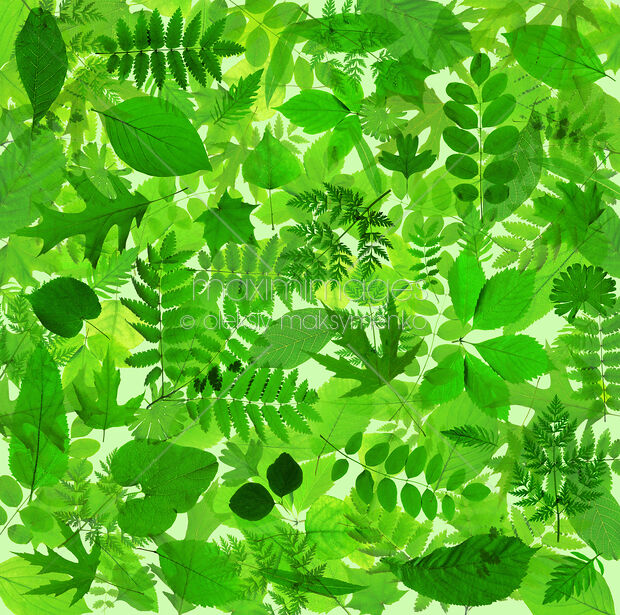 Stock Photo Of Abstract Green Leaves Background Image Mxi24577 At Maximimages Com