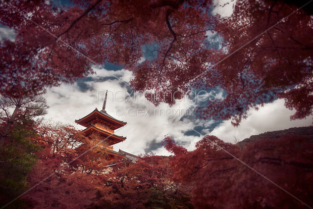 Artistic autumn scenery of Sanjunoto pagoda in autumn scenery behind red trees at Kiyomizu-dera Kyoto Japan