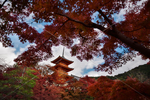 Photo Of Autumnt Scenery With Red Japanese Maples And Sanjunoto
