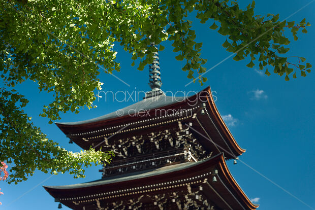 This Rights-Managed stock photo of Hida Kokubunji Temple Pagoda under a Ginkgo tree by Alex Maxim, is available for commercial, editorial or personal usage. You can buy a license of this image at MaximImages.com.