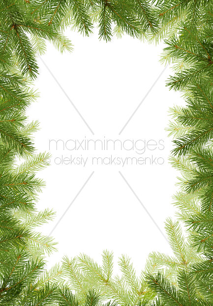 Stock illustration: White Christmas background with fir tree frame ...