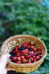 Hand holding a basket with home grown strawberries and other berries