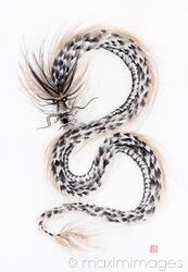 Majestic asian dragon coiling in the aire sumi-e black and gold ink painting on white