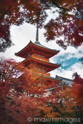 Sanjunoto pagoda in Kiyomizu-dera Kyoto surrounded by red leaves of Japanese maples